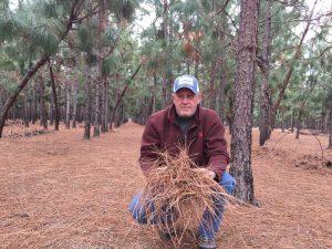 John Smith, owner Superior Longleaf Farms